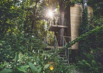 domki w drzewach