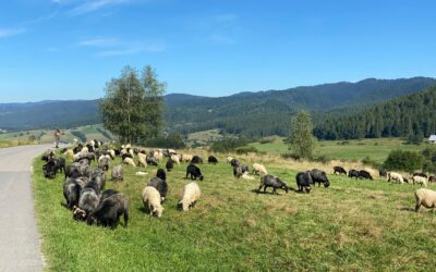 Pieniny na weekend